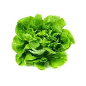 Lechuga española verde
